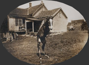 Figure XX - W.G. Ferguson's two-legged colt [114]