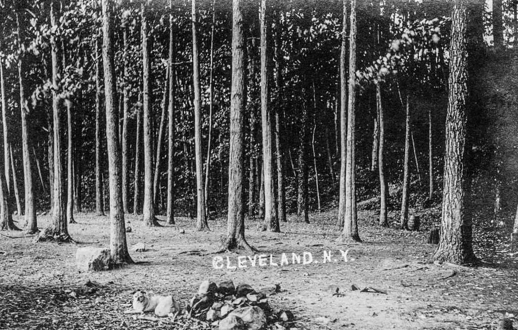 Figure V - Foster Grove Postcard (Cleveland Historical Society)